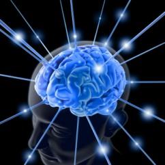 brain 763982 11 242x241 custom The Chemistry of Genius?