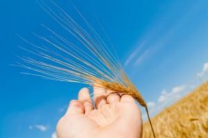 harvesthands